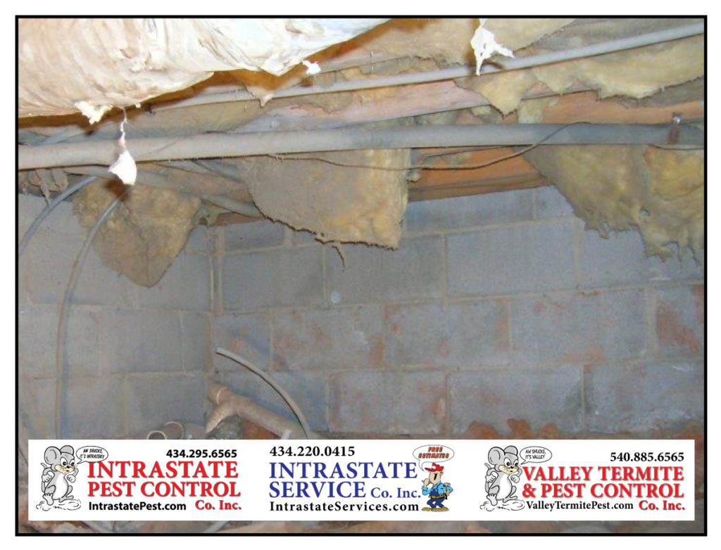 Rid Your House Of Mold