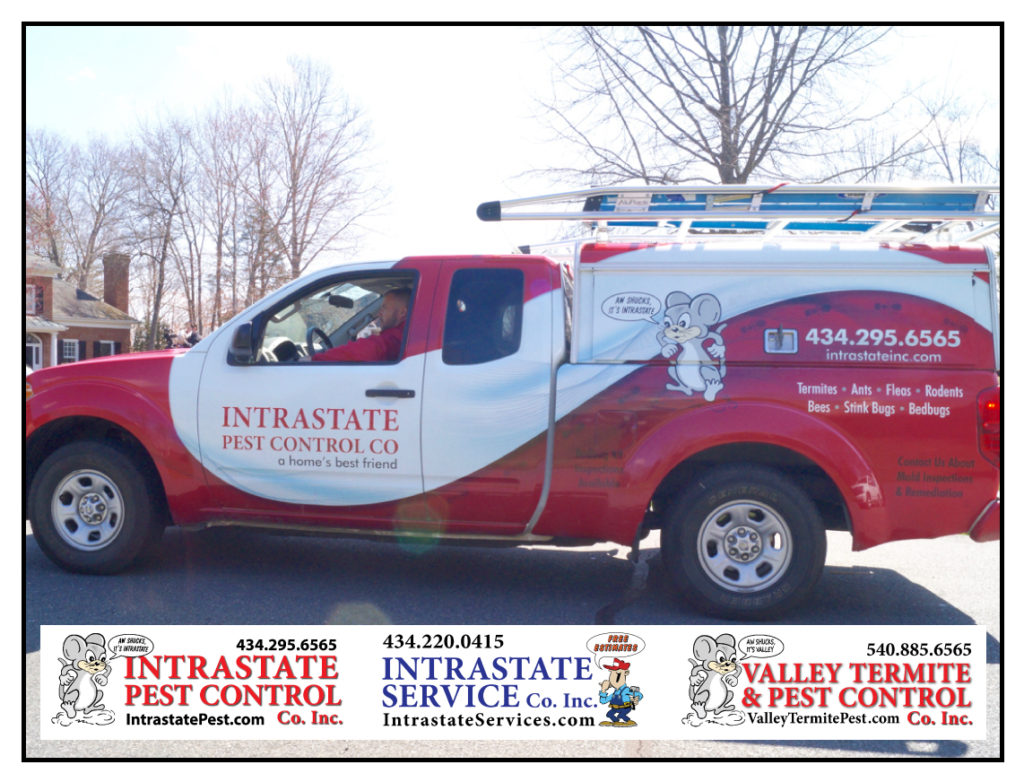 Be Pro-Active With Your Family's Safety - Intrastate Pest