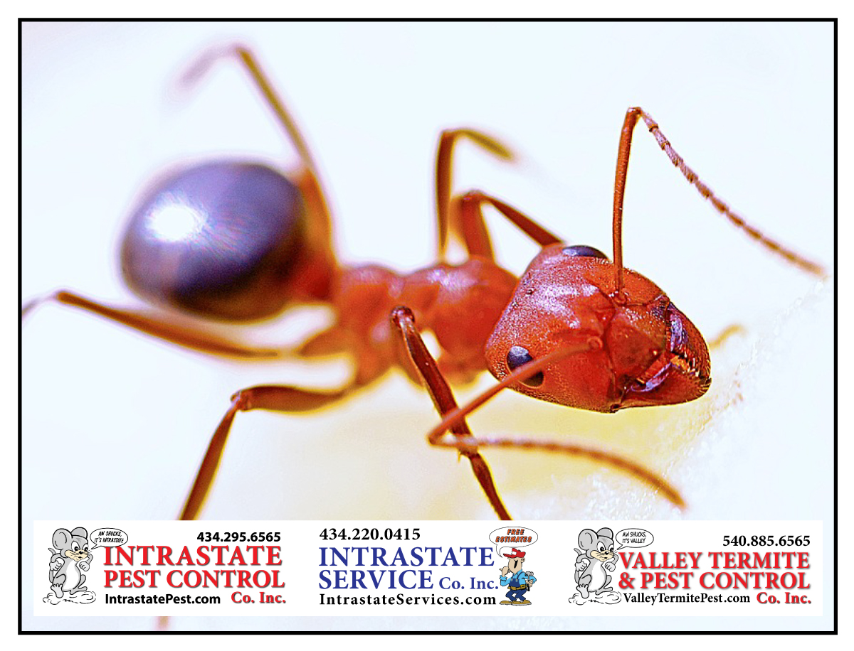 Get Those Ants Out Of The Kitchen - Intrastate Pest Control
